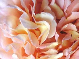 dettagli di petali di rosa