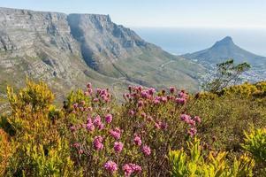 paesaggio montano con fiori estivi a cape town, sud africa foto