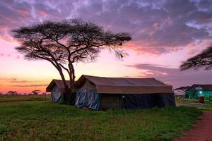 campo tendato nella savana foto