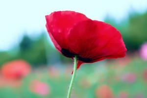 bellissimi fiori, primo piano, creativi