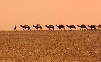 carovana di cammelli foto