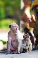 famiglia di scimmie foto