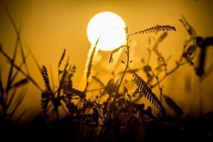 sagoma del sogno al tramonto foto