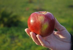 mano femminile che tiene una mela foto