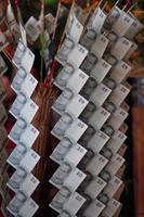 albero dei soldi Tailandia foto