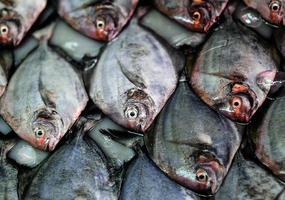 primo piano del modello di bancarelle di pesce foto