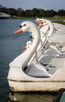 barca a pedali del cigno foto