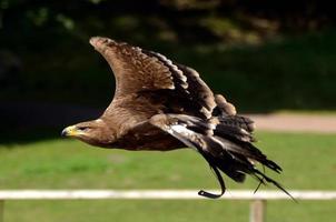 uccello, vogel foto