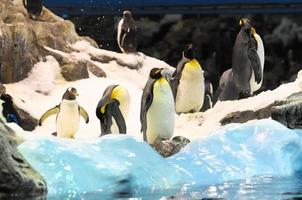 pinguino bianco e nero foto