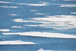 un pinguino solitario che cammina sul ghiaccio in Antartide