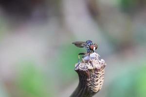 insetto che mangia altro insetto