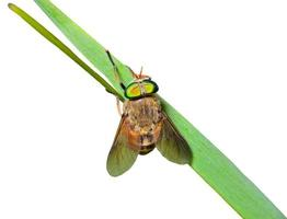 volare sul filo d'erba foto