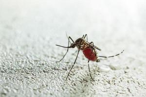 succhiare le zanzare