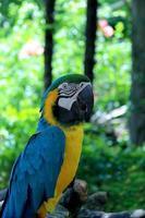 pappagallo su un ramo foto