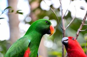 uccello tropicale pappagallo foto