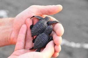 protezione della tartaruga foto