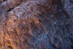 piumaggio di struzzo grigio fotografato da vicino foto