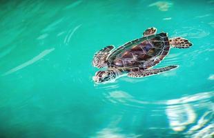 stretta di tartaruga carina foto