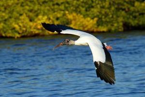 cicogna di legno che vola in basso sopra l'acqua foto