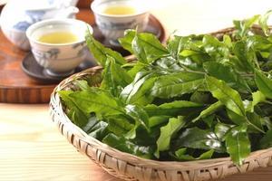 foglia di tè verde foto