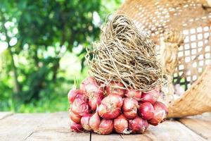 sfondo di cipolle rosse foto