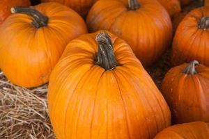 patch di zucca in un campo di paglia. sfondo per l'autunno foto