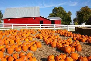 fattoria di zucca di halloween foto