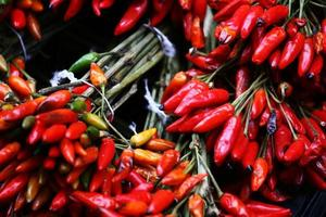 Red Hot Chilly Pepper foto