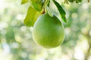 frutto pomelo foto