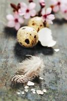 Pasqua foto