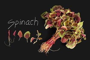 lavagna organica della verdura fresca rossa degli spinaci foto
