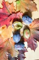 prugne mature su uno sfondo di foglie di acero colorate foto