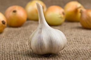 testa d'aglio foto