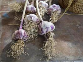 germogli di aglio foto