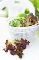 insalata di lattuga in spinner foto