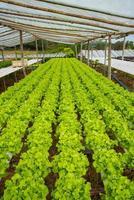 verdure biologiche foto