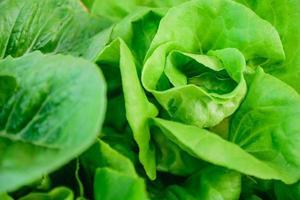 verdura idroponica