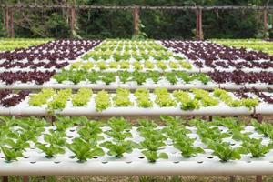 verdure idroponiche