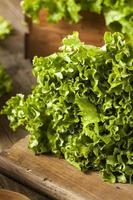 lattuga verde organica fresca sana foto