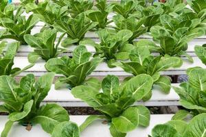 orticoltura idroponica in serra