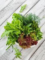 varietà di erbe biologiche fresche (lattuga, rucola, aneto, menta, lattuga rossa) foto