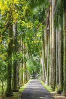 alberi giganti foto
