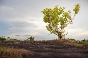 albero solo foto