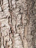 struttura ad albero foto