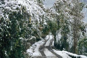 alberi d'inverno foto