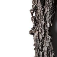 albero di corteccia foto