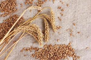 grano e spighe di grano sul primo piano della tela da imballaggio foto