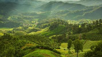 paesaggio con campo di grano verde, foresta, montagne