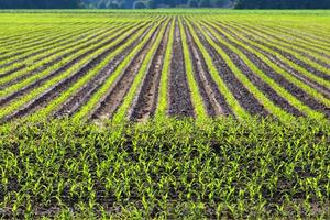 modello di campo coltivato foto