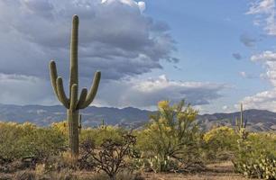 paesaggio del saguaro foto